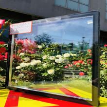 天津台玻 可钢化单银 Low-E 大板 玻璃