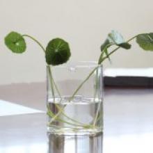 透明水培植物玻璃花瓶器皿